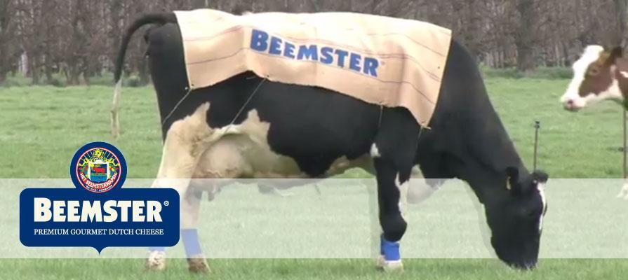 Beemster Graskaas Cheese Has Arrived
